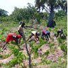 Workers and Christian Andres doing field work. Yams is planted in soil heaps that need to be restored after the rains have made them crumble away