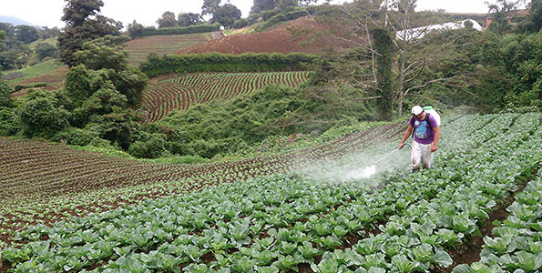 Farm workers apply pesticides on a vegetable farm in Costa Rica (Photo: Frederik Weiss, Eawag)