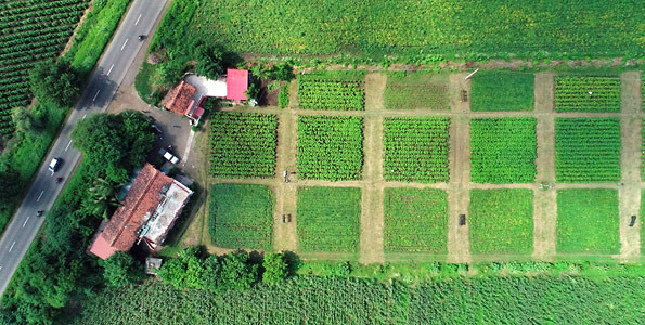 Aerial view of the long-term field experiment of the SysCom project on the bioRe research station in Nimar valley, central India (Photo: SysCom India Team)