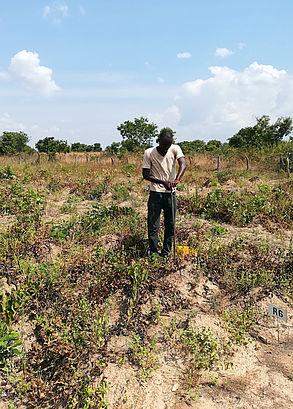 Léo (Burkina Faso): Soil sampling with auger